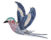 650x507_Quality97_ad_Lilac-Breasted-Roller-_Clip2-HD_.jpg