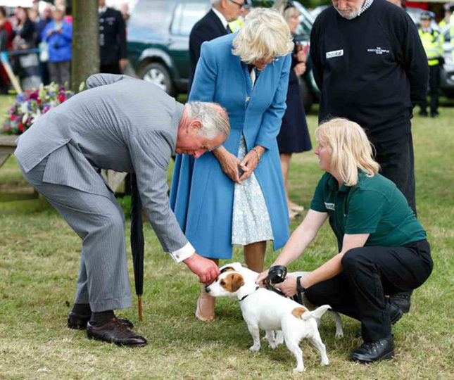 The British Royal Family has long been known for its affection for dogs, and Queen Victoria commissioned portraits of hers, which hang in Clarence House. Here, Prince Charles and Camilla, Duchess of Cornwall, play with two Jack Russells at the 2015 Flower Show at Sandringham, the Queen's country retreat near King's Lynn.