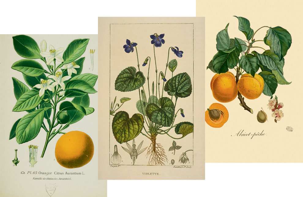 Альбом From Marie-Antoinette's Garden: An Eighteenth-Century Horticultural Album